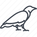 animal, halloween, holiday, raven icon