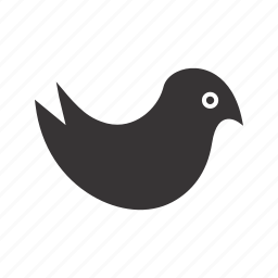 cuite bird, seo, social, twitter icon