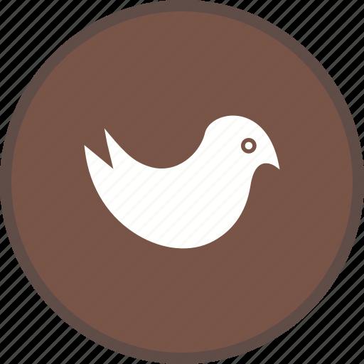bird, social, twitter icon