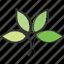 bio, health, eco, plant, herb, organic, leaf