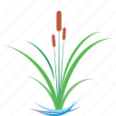 bulrushes, green, plant, pond, reed icon