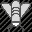 fly, disturb, bug