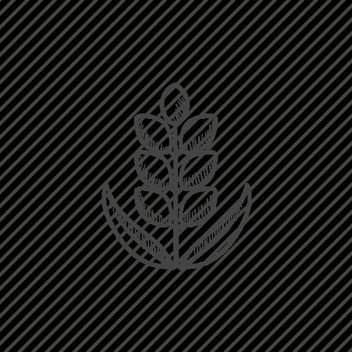 corn, grain, plant, seed, stalk, straw, wheat icon