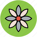 blooming, daisy, eco, ecology, floral, flower, nature icon