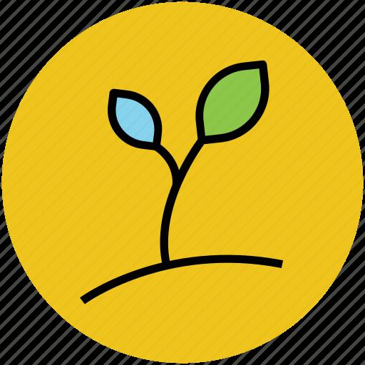 foliage, growing plant, nature, plant, plant leaf, seedling icon