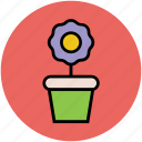 gardening, growing plant, plant, plant leaf, pot, potted plant icon