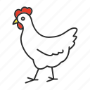 animal, chicken, domestic, egg, farming, hen, poultry icon