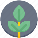agriculture, farming, garden, gardening, leaf, plant, seed icon