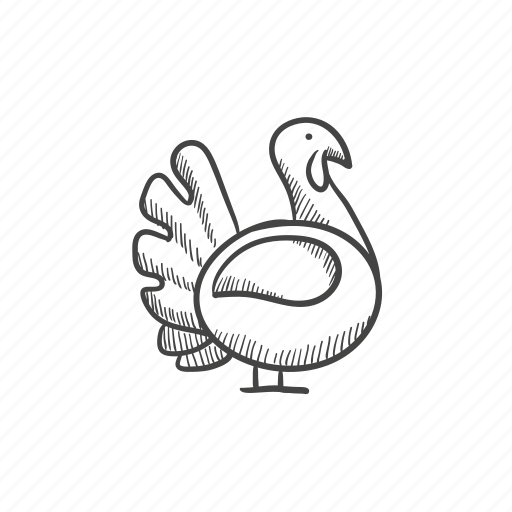feathers, fowl, gobbler, poultry, thanksgiving, turkey icon