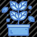 herb, leaf, plant, spa