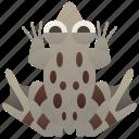 animal, edible, frog, hybrid, water