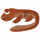 amphibian, giant, japanese, river, salamander
