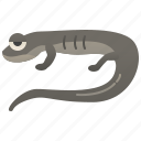 ambystoma, animal, jefferson, mole, salamander icon