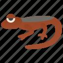 amphibious, caudata, newts, salamander, semiaquatic