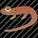 american, dusky, fauna, northern, salamander icon