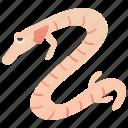 aquatic, cave, olm, proteus, salamander