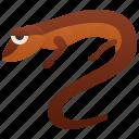 long, salamander, slender, tail, wildlife