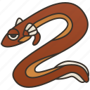 aquatic, endanger, fauna, giant, salamander