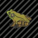 animal, bullfrog, carnivorous, frog, toad, vertebrates