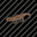 amphibian, animal, gracile, northwestern salamander, salamander icon