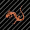 amphibian, animal, cave salamander, salamander, tail salamander, vertebrates icon