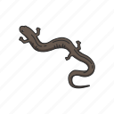 amphibians, animal, hunter, red hills, red salamander, spring salamander