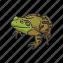animal, bullfrog, carnivorous, frog, toad, vertebrates icon