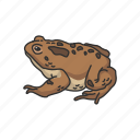 american toad, carnivorous, frog, toad, vertebrates icon