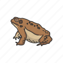 american frog, carnivorous, frog, toad, vertebrates icon