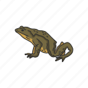 amphibian, animal, frog, goliath frog, toad, vertebrates icon
