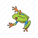 amphibian, animal, carnivorous, frog, toad, tree frog, vertebrates