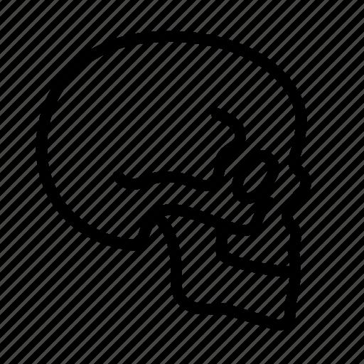 anatomy, body, head, human, organ, skeleton, skull icon