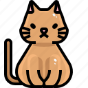 animal, cat, kingdom, mammal, pet, veterinary