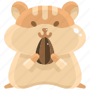animal, animals, hamster, kingdom, pet, shop, wildlife