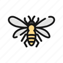 animal, bee, bug, hive, insect