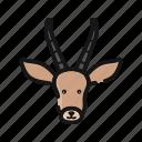 elk, mammals, rudolph, deer, reindeer, wild, animal