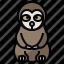 animal, kingdom, life, sloth, wild, zoo icon