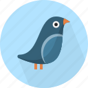 animal, bird, fly icon
