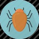 bug, animal