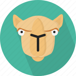 animal, camel, safari, zoo icon