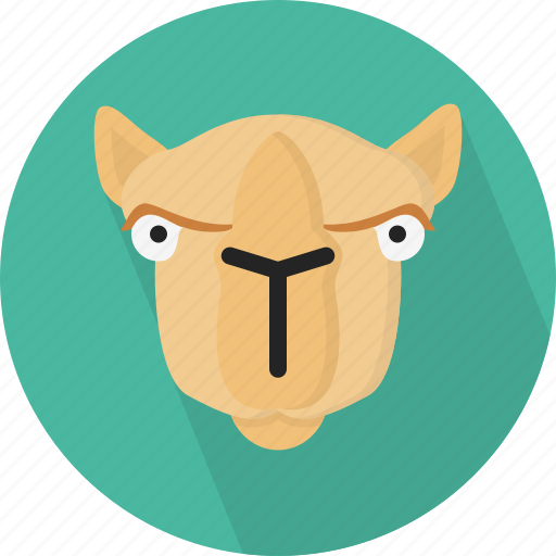 animal, camel, safari, zoo icon