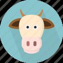animal, cow