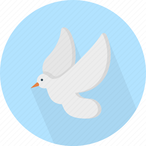 animal, dove, fly icon