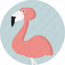 animal, flamingo, jungle, safari, zoo icon