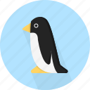 animal, penguin, sea icon