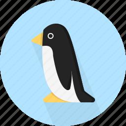 animal, penguin, sea icon