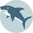 animal, danger, sea, shark icon