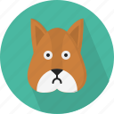 animal, squirrel icon