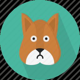 animal, squirrel icon