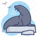 seal, sea, animal, wild